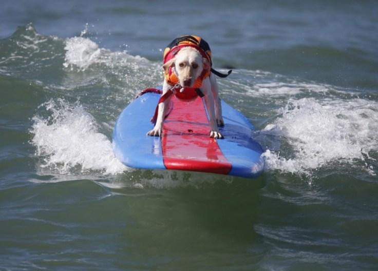 chien-en-surf_012