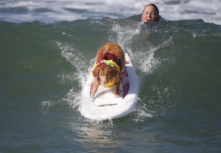 chien-en-surf_018