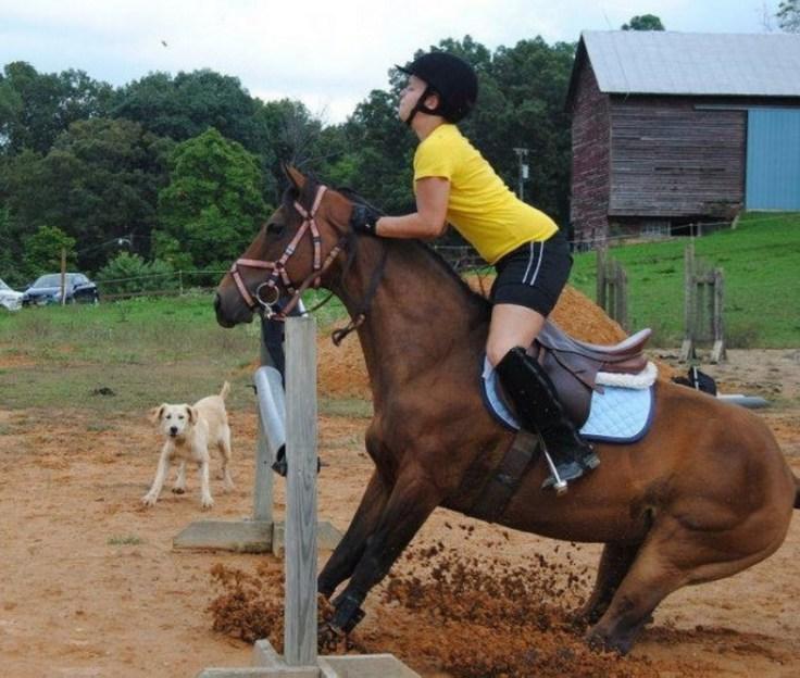 mon petit poney t35t55e_923