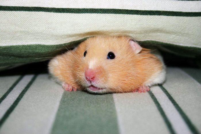Une vie de Hamster)