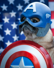 avengers assemble - version canine chien (1)