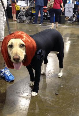 avengers assemble - version canine chien (3)