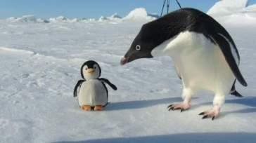 imposture pingouin (2)