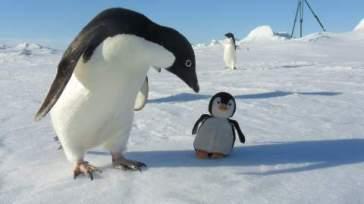 imposture pingouin (4)