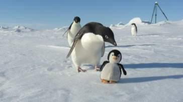imposture pingouin (5)