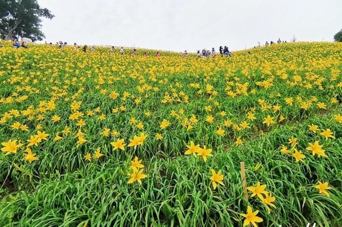 彰化景點|虎山巖金針花 我在虎山巖 金針花繡球花開