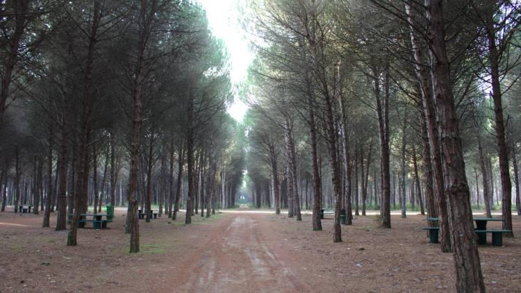 Parque de Merendas da Portela