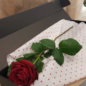 SINGLE RED ROSE – BOXED