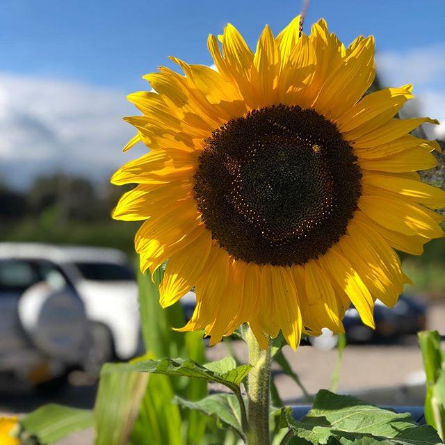 Sunflowers #myfavoritethings