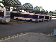 Pink Buses