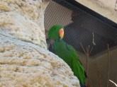 Parrot in zoo