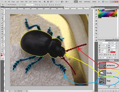Bloodynosed beetle