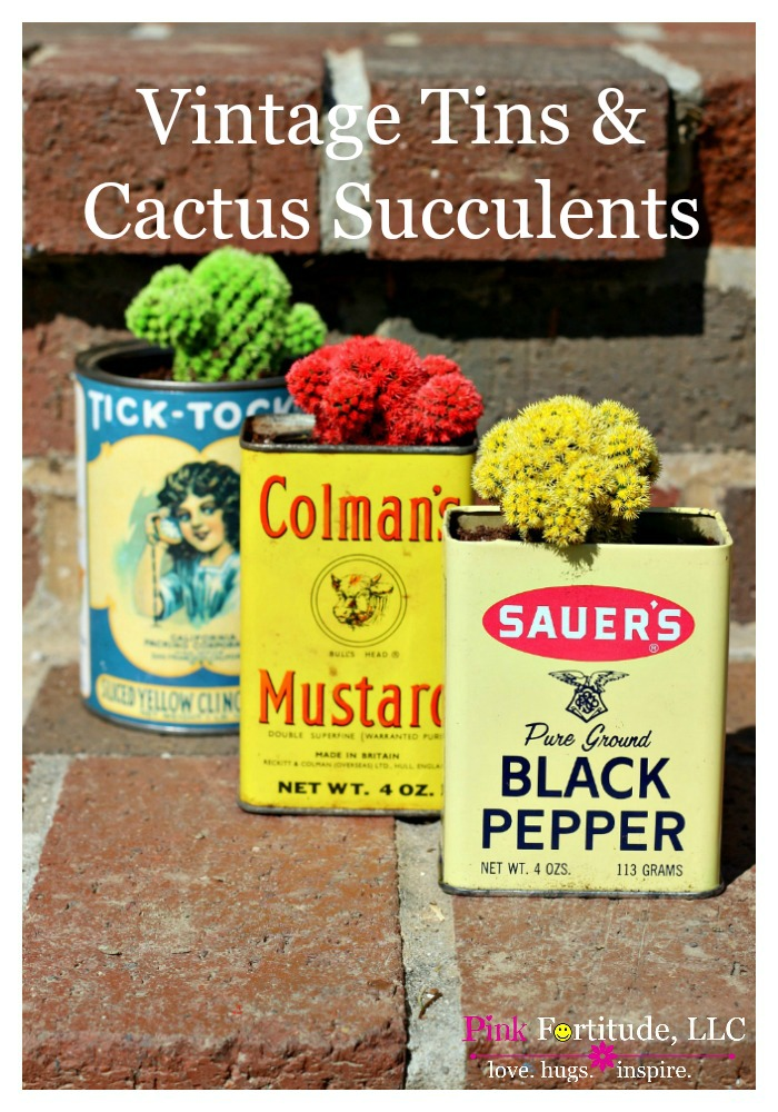 Adding succulents to vintage tins is nothing new, but I'm totally crushing on these colorful cacti succulents! Have you seen anything like this before?