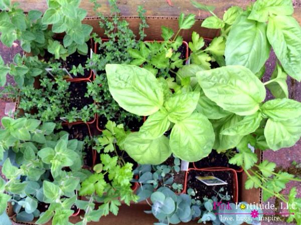 herb garden 11
