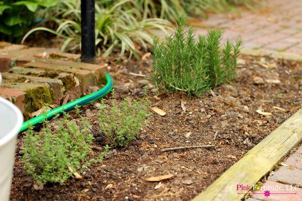 herb garden 8