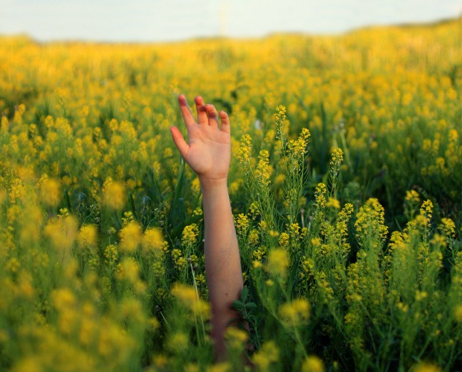 Five All Natural Allergy Busters