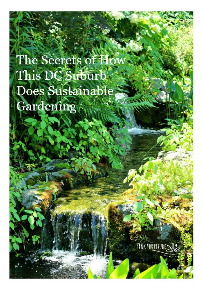 The Secrets of How This DC Suburb Does Sustainable Gardening - Pink ...