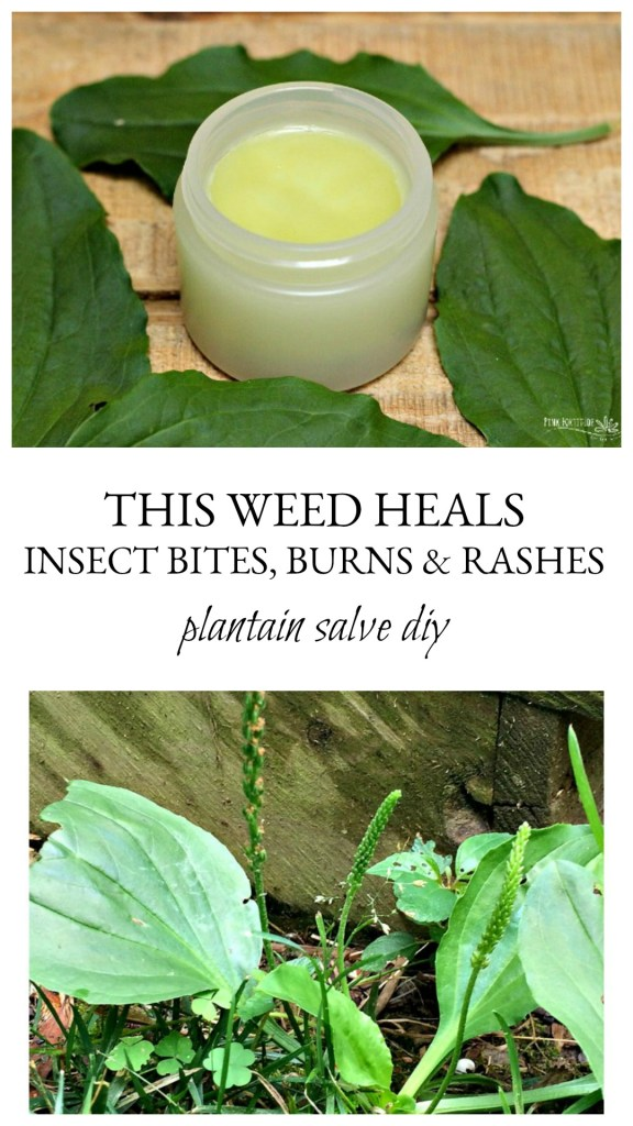 Just when you think there is nothing worse than dry winter skin, summer happens. Summertime creates its own share of issues for your skin such as bug bites, stings, heat rashes, sunburn, and dry skin. Look no further than outside your front door for an easy DIY salve that will take the itch away.