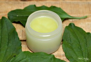 This Weed Heals Insect Bites, Burns and Rashes – Plantain Salve DIY