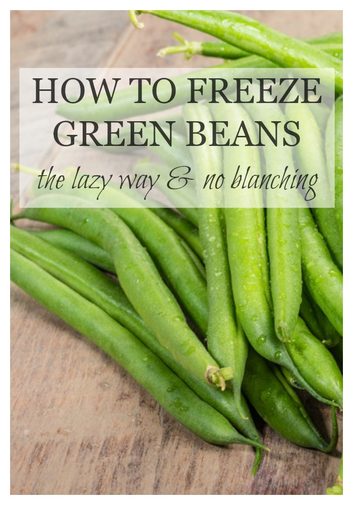 Green beans always seem to grow like crazy in the garden, and then need to be harvested all at the same time. It's a good problem to have, right? You want to freeze green beans to preserve them, but it's way too much work, right? Wrong! If you want to know how to freeze green beans the lazy way and with no blanching... then keep reading!