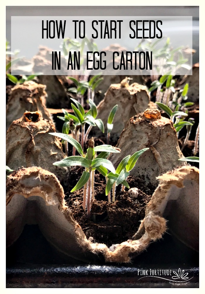 Whether you are a novice or avid gardener or want to teach your child some great lessons about being green and sustainable, growing and starting seeds in an egg carton is super quick and easy! It's a great way to kick off the warmer spring days! Learn how...