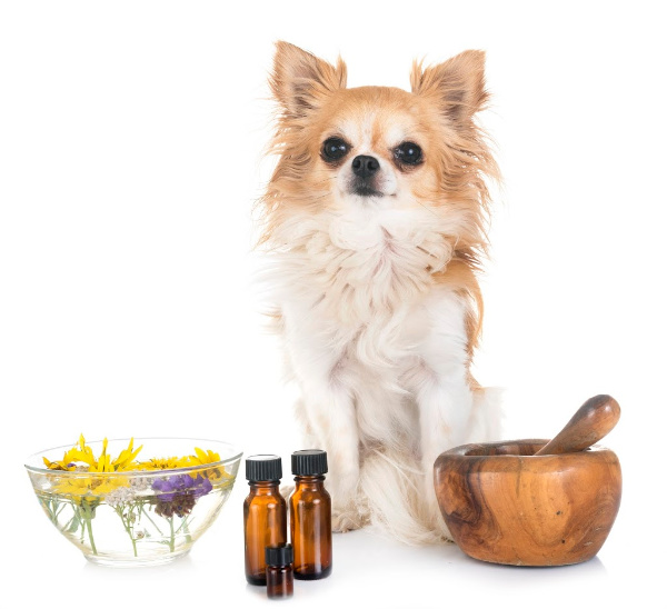 Safe and Harmful Essential Oils for Dogs