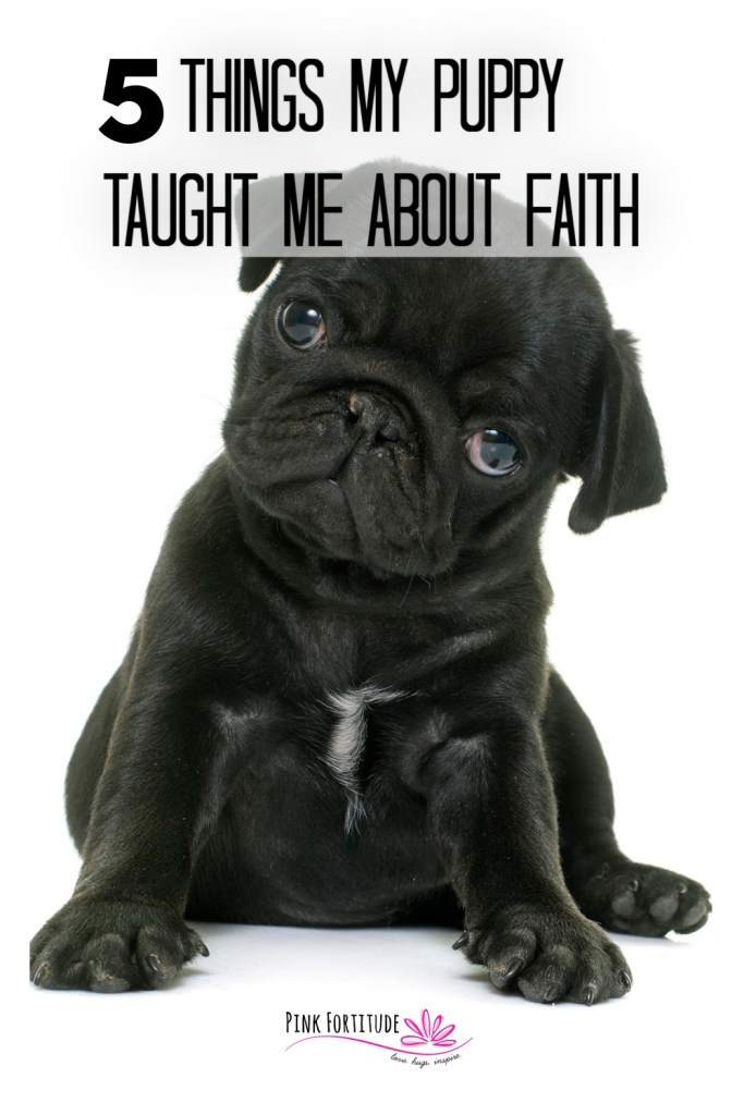 Throughout the Bible, God shares his wisdom through real-life stories and experiences. We can learn the same by looking at the world around us and asking God to give us wisdom. As I'm watching my puppy grow up and experience the world, I'm learning about the parallels about my faith in God. Keep reading for 5 things my puppy taught me about faith.