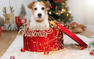 How to Create the Perfect Holiday Card with Your Dog