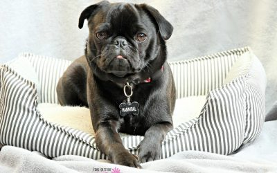 5 Ways to Control Dog Odors in Your Home