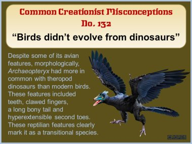 Birds didn't evolve from dinosaurs.