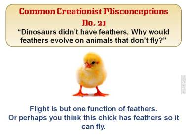 Dinosaurs didn't have feathers. Why would feathers evolve on animals that don't fly?