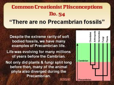 There are no Precambrian fossils.