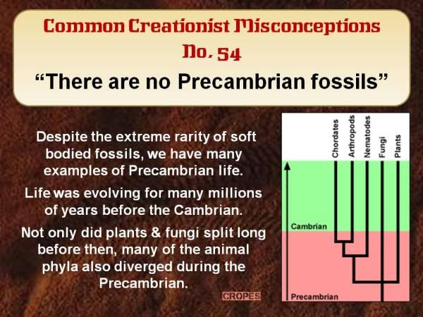 There are no Precambrian fossils.