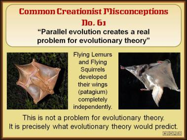 Parallel evolution creates a real problem for evolutionary theory.