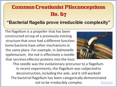 Bacterial flagella prove irreducible complexity.