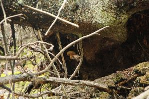 Salamyhkäinen sieni