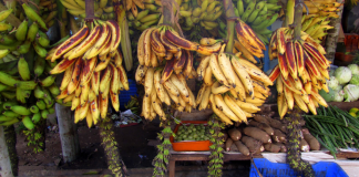 Export of Kerala's Nendran banana