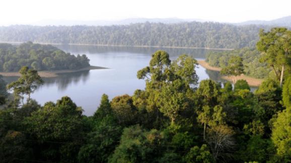 Sholayar Reserve Forest