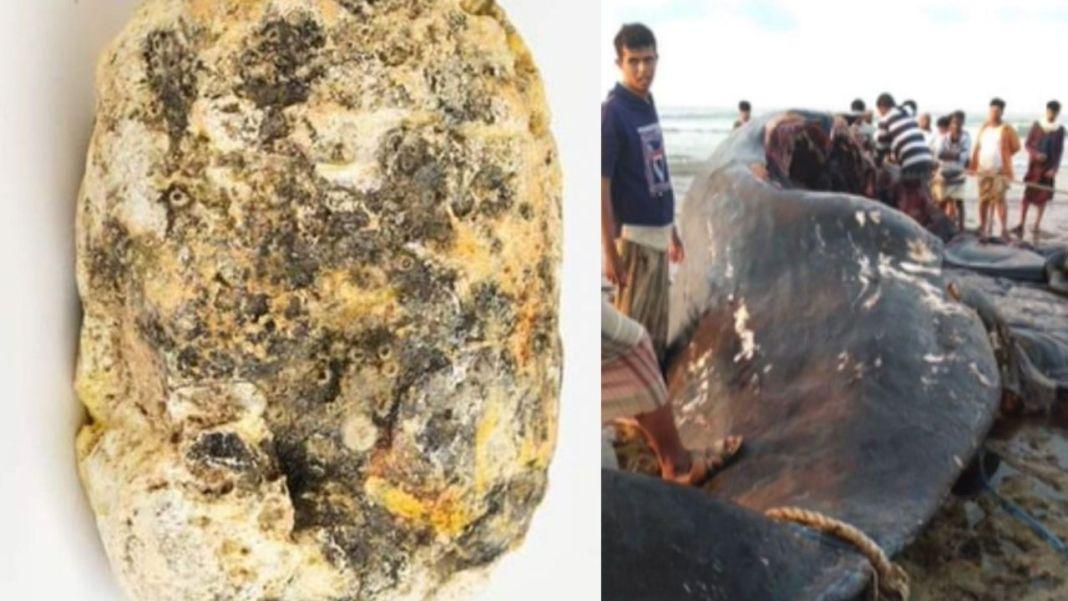Whale Vomit Worth ₹10 Crore Found By Fishermen In Yemen