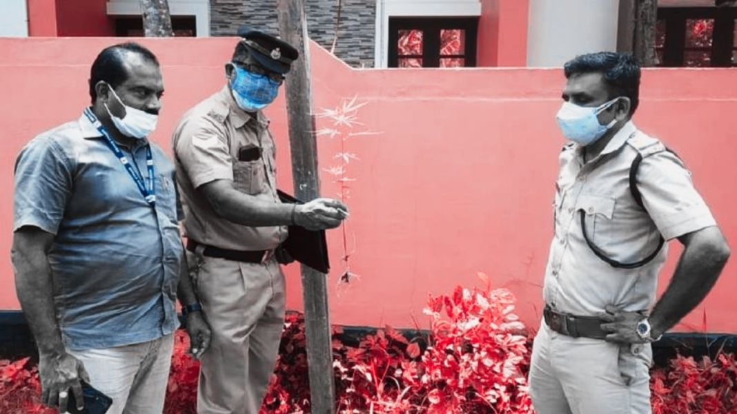 Ganja Saplings Planted on World Environment Day