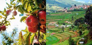 Vegetable Farm kerala vattavada idukki