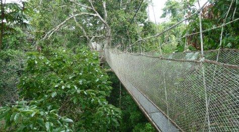 Explorama's Canopy Walk