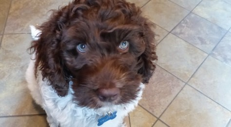 Super Truffle at Nine Weeks