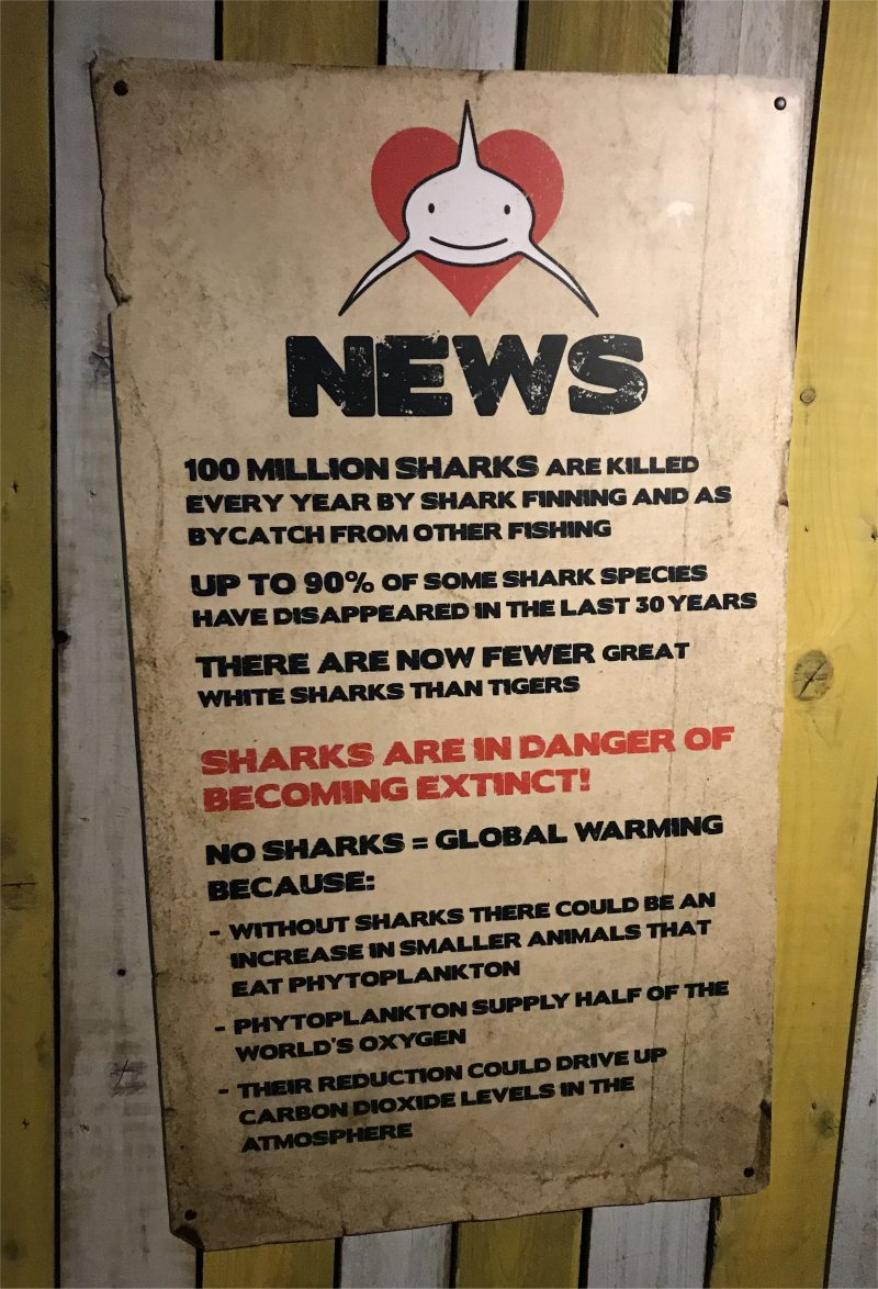 facts about sharks being in danger