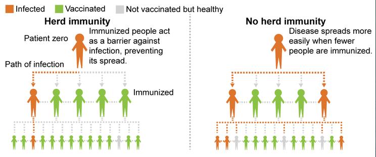 Diagram explaining herd immunity