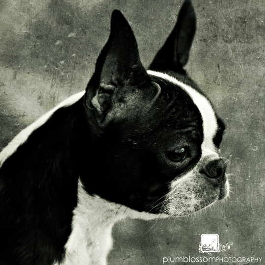 My little dog - a heartbeat at my feet - by Susie Hodge