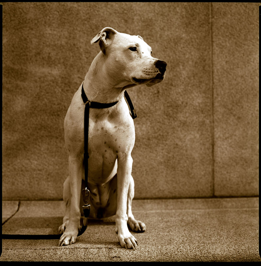 "Bronica dog by ""fast boy"""