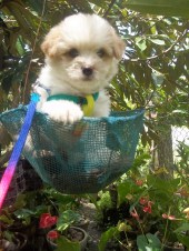 pooch-on-basket