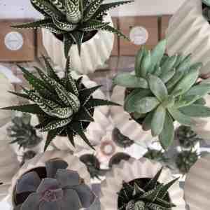 Geo-Fleur succulent pots