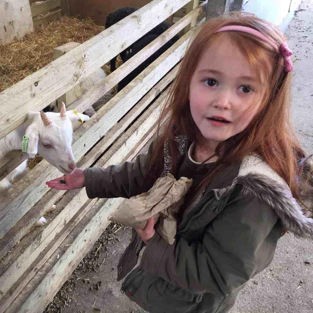 Ava smiling, feeding a goat at Green Dragon Eco Park